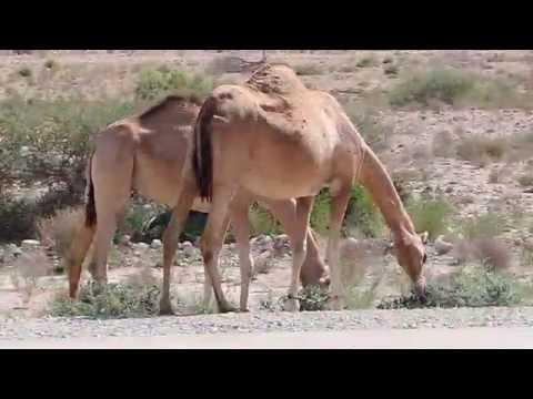 Oman - Rundreise durch ein wunderschönes Land!