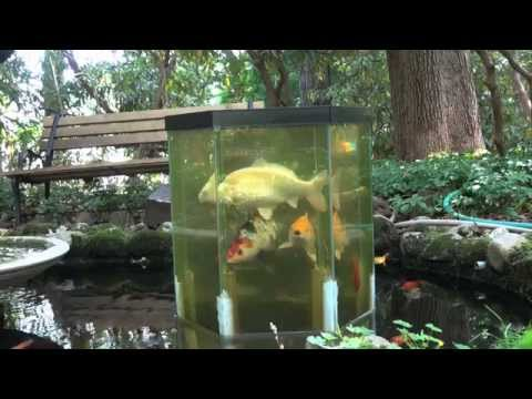 New stainless feeder for upside down fish tank doovi for Spring water for fish tank