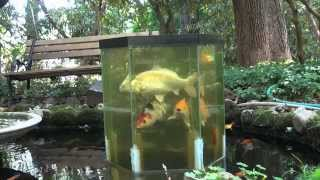 the fish penthouse, an above water aquarium