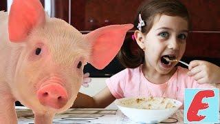 ემილია მიირთმევს ფაფას, ფაფის ჭამაში ემილიას ეხმარება ნამდვილი პეპა გოჭი, გასართობი ვიდეო