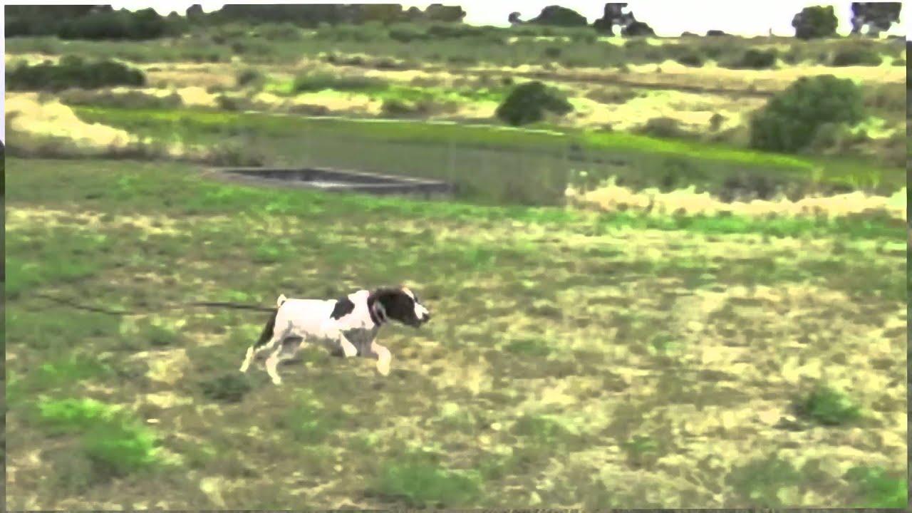 Dog Training San Leandro Ca