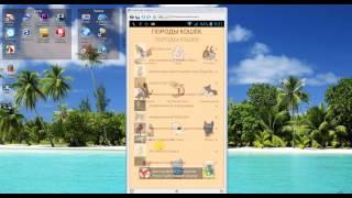 Породы кошек (Андроид приложение)