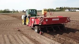Potato planting / Potatis sättning / Perunan istutus