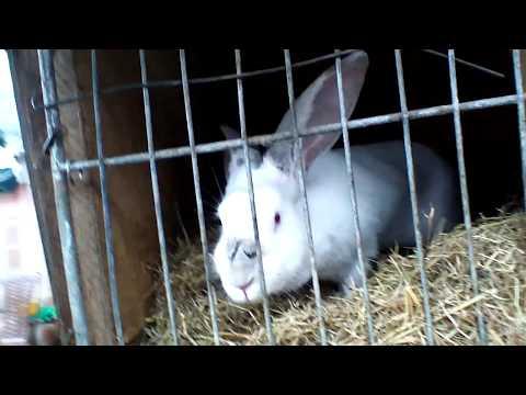 Вопрос: Видят ли в темноте кролики?