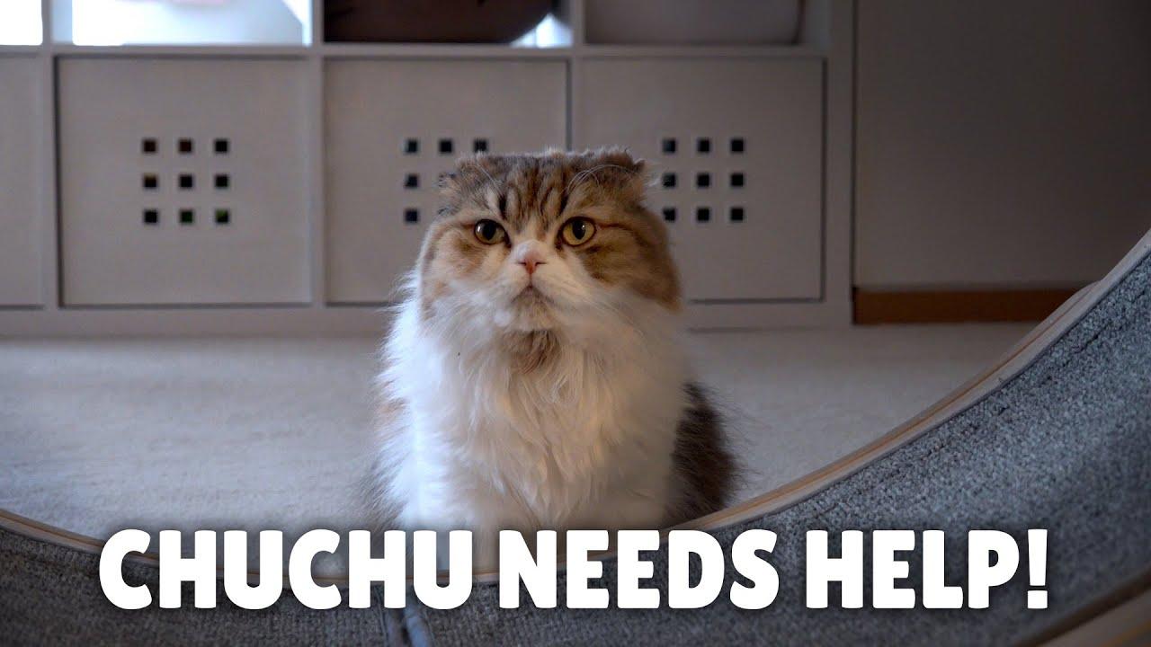 ChuChu Needs Your Help!   Kittisaurus Villains