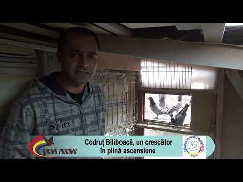 Codruț Biliboacă, Un Crescător în Plină Ascensiune