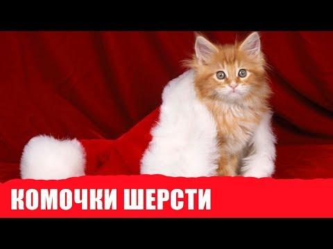 Вопрос: Как не допустить образования комков шерсти в желудке у кошек?