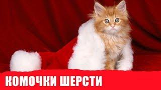 Выведение комочков шерсти из желудка кошки. Советы ветеринара Роял Канин
