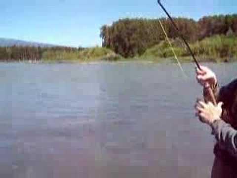 Fly Fishing For Skeena River Sockeye Salmon