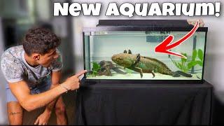 My GIANT AXOLOTL OUTGREW His Aquarium!! *New Home*
