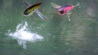 【水面炸裂】クロールするルアーを襲う大魚が凄かった