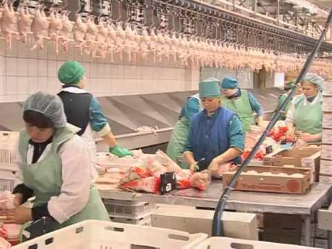 Межениновская птицефабрика – одно из крупнейших птицеводческих предприятий западной сибири. Мы работаем по системе замкнутого цикла: выращиваем цыплят-бройлеров, перерабатываем полученное сырье и реализуем готовую продукцию из куриного мяса. Нежное и сочное куриное мясо.