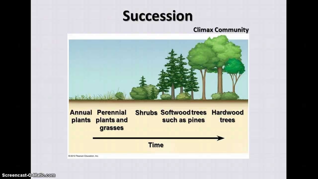 ecosystem succession Ecological succession is the process by which an environment changes structure, in terms of resident species, over a period of time  science aid: ecosystems.
