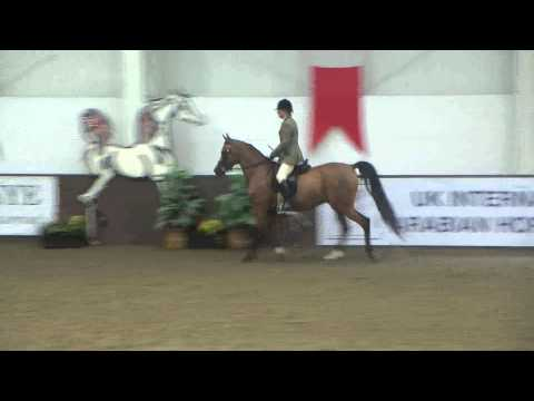 UK International Arabian Horse Show 2013 - Class17 Ridden Geldings