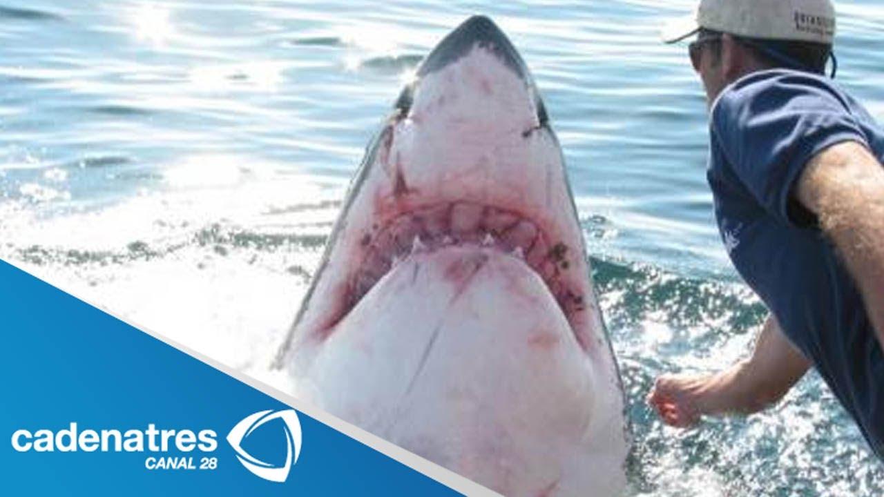 Video Del Ataque En Nueva Zelanda Image: Hombre Sobrevive A Ataque De Un Tiburón En Nueva Zelanda