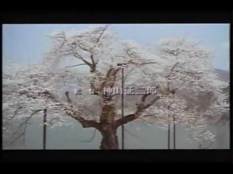 映画 さくら  篠田三郎・田中好子