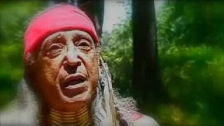 Little Hawk - Native American Wisdom | Indigenous Storytelling