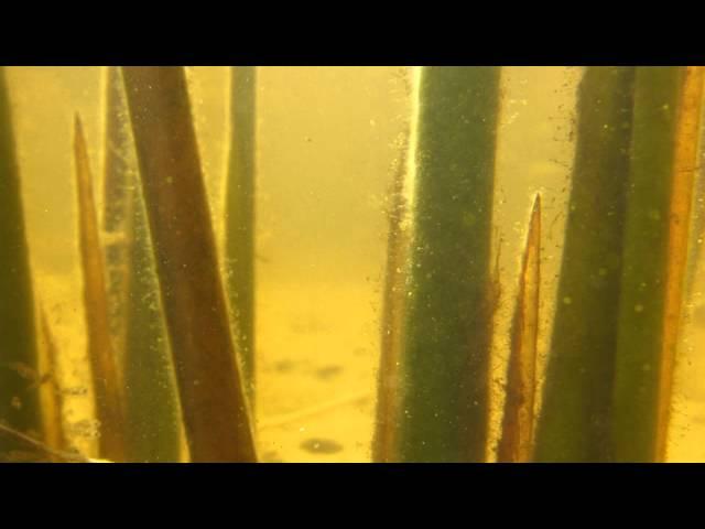 Laguna de Briozzo Underwater