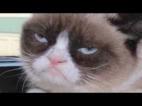 grumpy cat goes from meme to the big screen   youtube