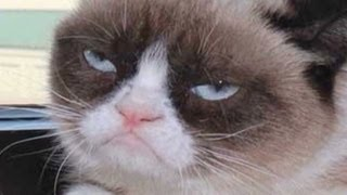Repeat youtube video Grumpy Cat goes from meme to the big screen