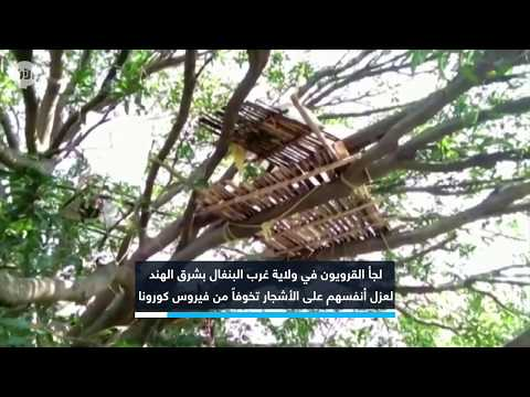 قرويون في الهند يحجرون أنفسهم على الأشجار لعدم كفاية المساكن  - نشر قبل 10 ساعة