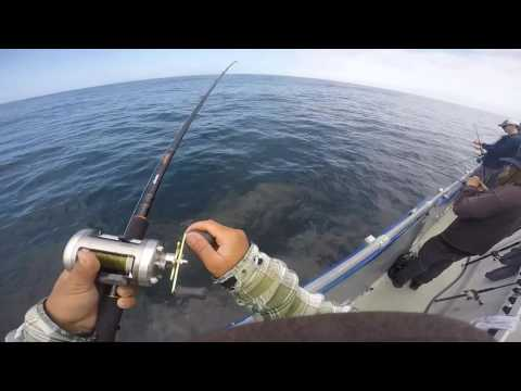 Fishing For Rockfish And Lingcod