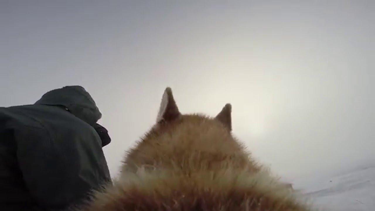 Dogystyl