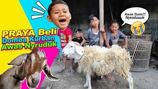 Drama Praya Beli Domba Kurban