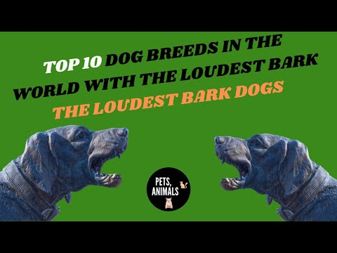 top-10-dog-breeds-in-the-world-with-the-loudest-bark---the-loudest-bark-dogs