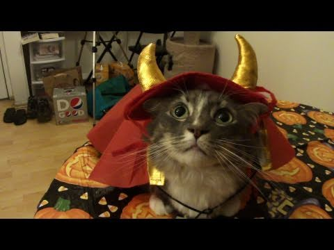 cats try on halloween costumes - Halloween Costumes For Kittens Pets