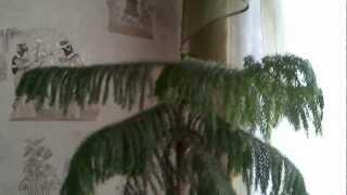 домашняя елка(, 2013-01-29T07:23:46.000Z)