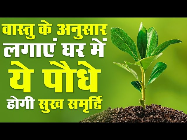 ?????? ?? ?????? ????? ?? ??? ?? ???? ???? ??? ??????? | These plants will house prosperity