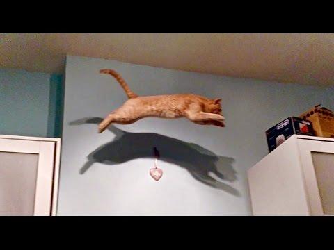 Cat fail - SLOW MOTION