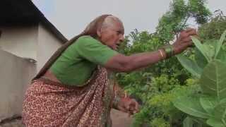 Farmers Speak: Iron Pearl Millet, India