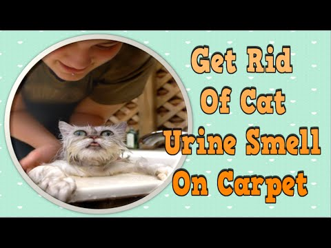 get rid of cat urine smell on carpet how to get rid of cat spray odor how to get rid of a cat. Black Bedroom Furniture Sets. Home Design Ideas