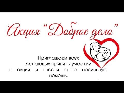 """Приют """"на Московском"""". Город Тольятти. Животные нуждаются в вашей помощи."""
