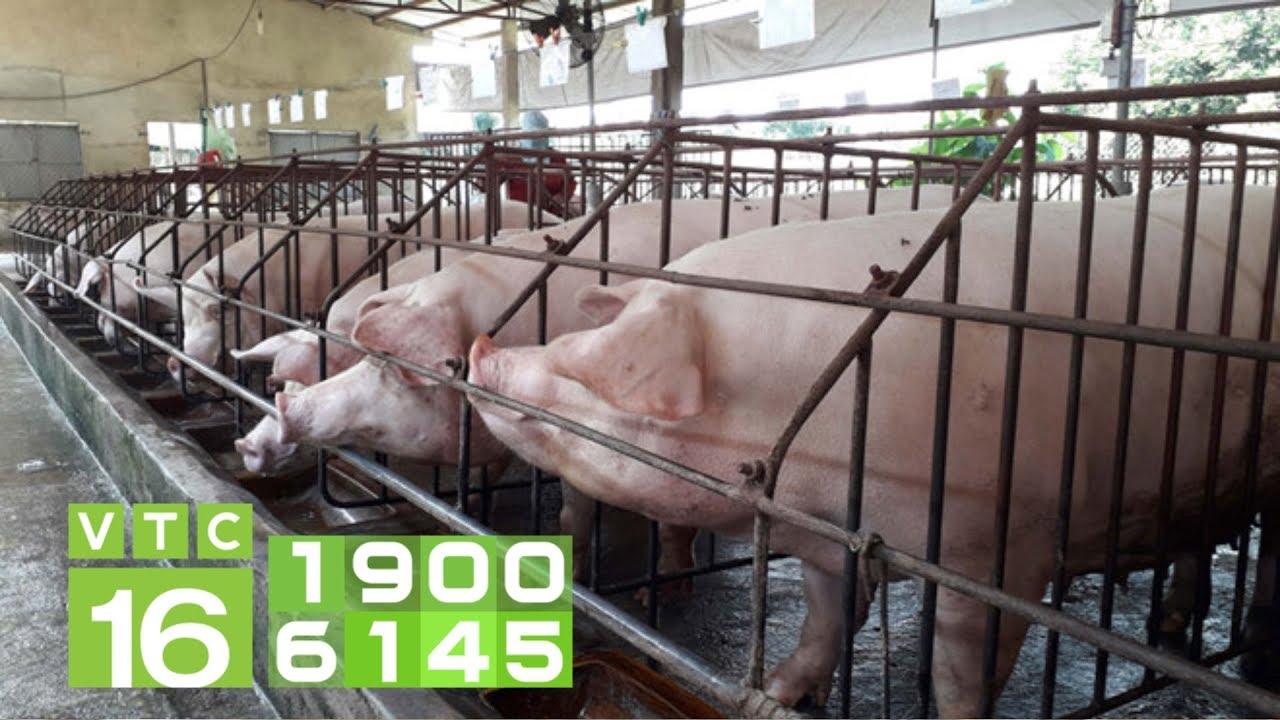 Thiết kế chuồng chăn nuôi lợn không xả thải   VTC16