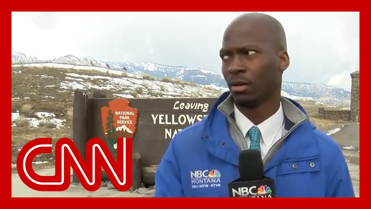 Montana reporter goes viral for bison video