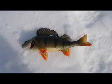 Ловля карася зимой – подготовка и советы по рыбалке