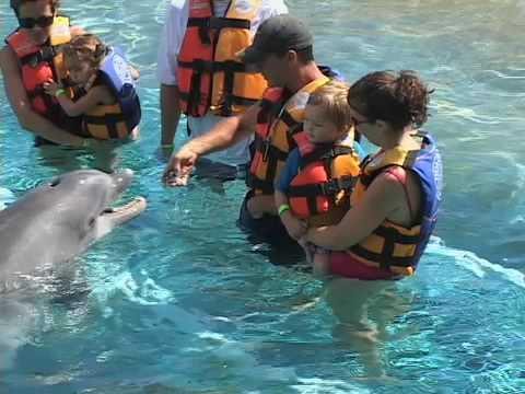Hawaii Oahu with Kids - Sea Life Park - Travel With Kids