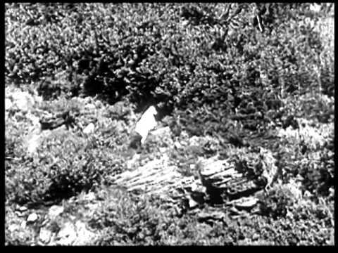 Stimming - Der Schmelz (David August Revision) - Official Video