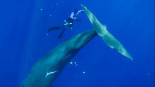 The Best Whale Moments Captured On Film | Top 5 | Bbc Earth