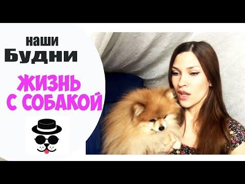 Стрижка собак на дому, цена от 990 рублей. Подстричь