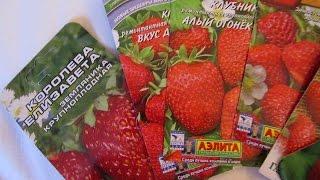 видео Хризантема » Садоводу, дачнику, огороднику.