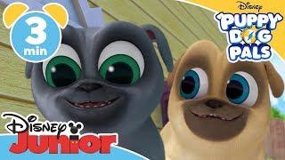 Puppy Dog Pals | Bob's Fetch Stick!  - Magical Moment | Disney Junior UK