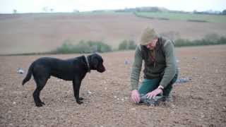 Pigeon Decoying: How To Place Decoys In Cradles