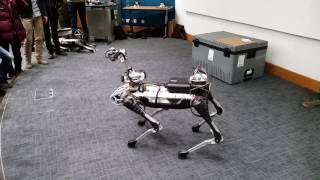 Boston Dynamics SpotMini Demo at UCL