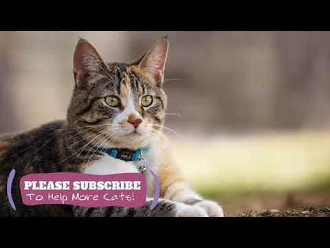 Magic Cat Music - 1 Hours Soothing Music for Pet Cats! ☯LCZ60