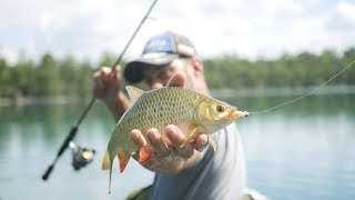 pêche du rotengles au leurre !!! truc de fou !!!