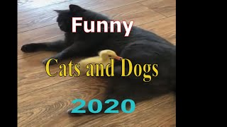 Most Funny Dogs And Cat Video 2020